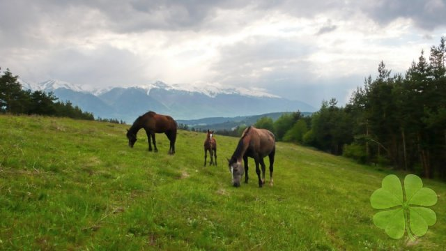 Pictures of Bansko area
